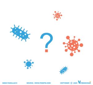 perbedaan virus dan bakteri