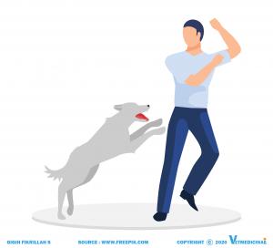five freedoms of animal welfare kesejahteraan hewan