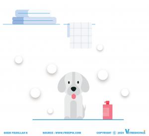 cara memandikan anjing
