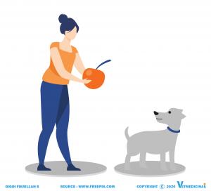sistem reproduksi pada anjing