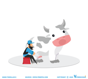 penyakit mastitis pada ternak